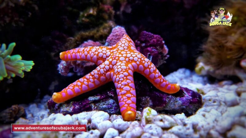 Amazing World of StarFish - Best Explanation of Sea Stars in 2020