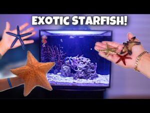BUYING COLORFUL STAR-FISH For My AQUARIUM!! *Rare*