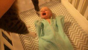 Baby Loves Cat