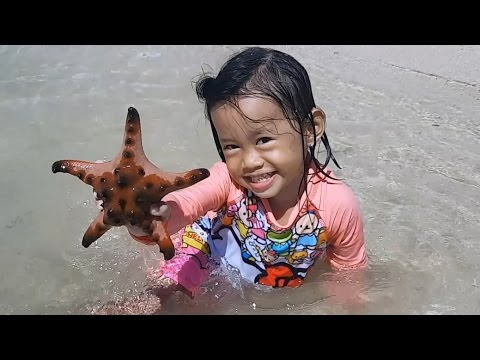 Baby Playing Star Fish and Beach Sand – Donna The Explorer