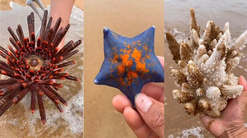 Finding Starfish And Beautiful Sea Stone at the Beach