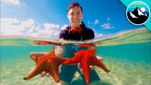 Finding Stars at Starfish Point! - Members Exclusive Preview