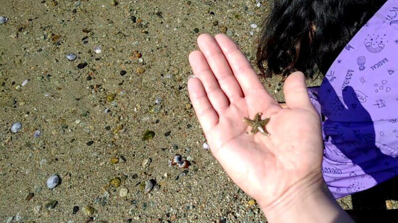 For starfish lovers ( baby starfish ) Part 1
