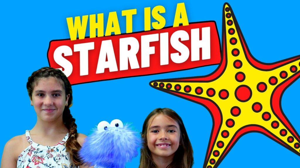 Is A Starfish Really A Fish? | Starfish Facts For Kids