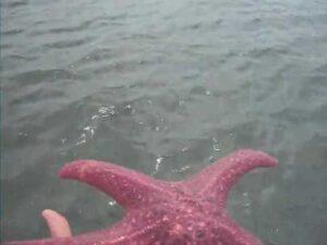 Pink Starfish Rescue