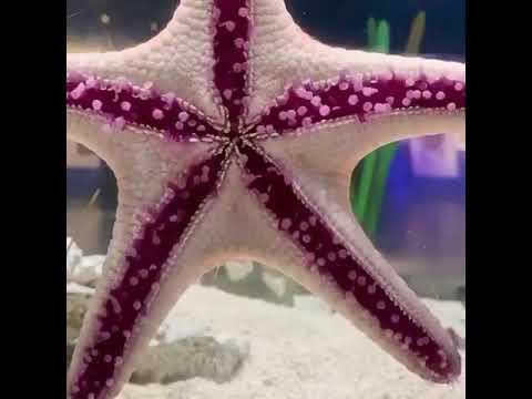 See Starfish walking