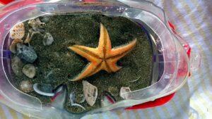 Small Starfish Flips Over