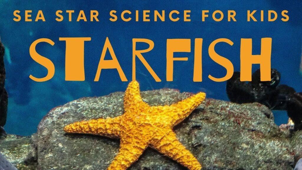 Starfish – 10 Cool Sea Stars for Kids Science