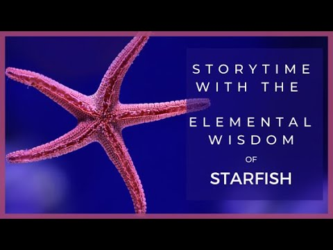 Starfish Shell Necklaces & Earrings | Nature Jewelry Storytime
