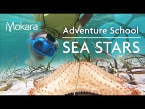 Starfish facts for Kids