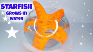The Amazing MEGA GROW STARFISH Review + Time Lapse Novelty Toy Reviews