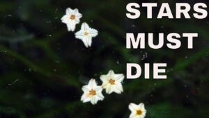 kill asterina starfish: asterina starfish good or bad: asterina starfish eating zoanthids