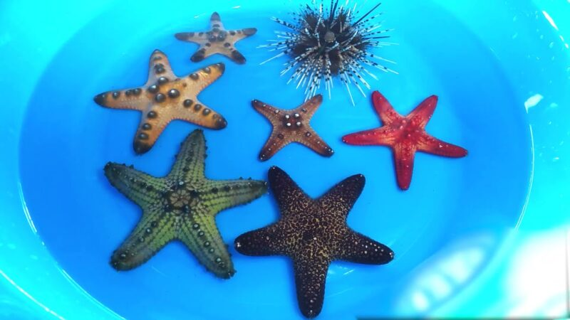 sea shells, hermit crabs, starfish, sea urchin